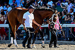 August 02 2015: Dontbewithbruno, trained by Todd Pletcher, walks to the paddock before the Haskell Invitational on Haskell Day at Monmouth Park in Oceanport, NJ. Bob Mayberger/ESW/CSM