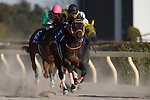 FUCHU,JAPAN-FEBRUARY 19: Gold Dream #3,ridden by Mirco Demuro (black cap),wins the February Stakes at Tokyo Racecourse on February 19,2017 in Fuchu,Tokyo,Japan (Photo by Kaz Ishida/Eclipse Sportswire/Getty Images)