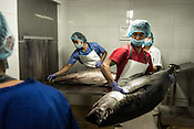 Workers check and take notes of the freshness of the sustainably caught yellow fin tuna as it is received at the Meliomar Processing unit in Pasay city in Metro Manila in the Philippines. <br /> Photo: Sanjit Das/Panos for Greenpeace