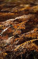 Europe/France/Centre/41/Loir-et-Cher/Sologne/Chambord: Domaine National de Chambord - La forêt - Fougères