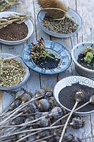 Wildkräutersamen, Wildkräuter-Samen, Samen von Wildkräutern, Samen von Wildpflanzen im Herbst sammeln, Saatgut, seed, Mohn-Samen, Mohnsamen, Samen von Mohn, Mohnsaat, Saat, Schlaf-Mohn, Schlafmohn, Mohn, Papaver somniferum, Opium Poppy, Nachtkerzen-Samen, Nachtkerzensamen, Samen von Nachtkerze, Nachtkerze, Gewöhnliche Nachtkerze, Zweijährige Nachtkerze, Oenothera biennis, Common Evening Primrose, Evening-Primrose, Evening star, Sun drop, Onagre, Karden-Samen, Kardensamen, Samen von Wilde Karde, Karde, Karden, Dipsacus fullonum, Dipsacus sylvestris, Fuller's teasel, wild teasel, teasel, common teasel, La Cardère sauvage, Cabaret des oiseaux, Cardère à foulon, Bonnetier sauvage, Chardon à bonnetier, Engelwurz-Samen, Samen von Engelwurz, Samen, Samenstände, Saat, Gewöhnliche Wald-Engelwurz, Waldengelwurz, Engelwurz, Angelica sylvestris, Wild Angelica, L'angélique des bois, L'angélique sauvage, L'angélique sylvestre, herbe à la fièvre, Seifenkraut-Samen, Samen vom Seifenkraut, Gewöhnliches Seifenkraut, Echtes Seifenkraut, Seifenwurz, Saponaria officinalis, common soapwort, bouncing-bet, crow soap, wild sweet William, soapweed, Malven-Samen, Samen von Malve, Rosen-Malve, Rosenmalve, Spitzblättrige Malve, Sigmarskraut, Siegmarswurz, Malva alcea, greater musk-mallow, cut leaved mallow, cut-leaved mallow, vervain mallow, hollyhock mallow