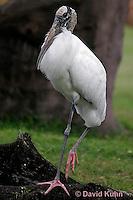 0206-08xx  Wood Stork, Mycteria americana © David Kuhn/Dwight Kuhn Photography