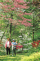 People, walking in a flowering spring forest. Salem County, New Jersey