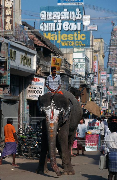 A elephant with Hindu markings walks along a busy city street.