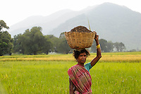 INDIA Odisha Orissa, Raygada, tribal village Bishnuguda, Dongria Kondh tribe, woman carry basket / INDIEN Odisha Orissa, Raygada, Dorf Bishnuguda, Ureinwohner Dongria Kondh, Frau traegt einen Korb