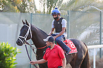 March 25, 2021: Dubai World Cup contender Title Ready trains on the track for trainer Dallas Stewart at Meydan Racecourse, Dubai, UAE. Shamela Hanley/Eclipse Sportswire/CSM