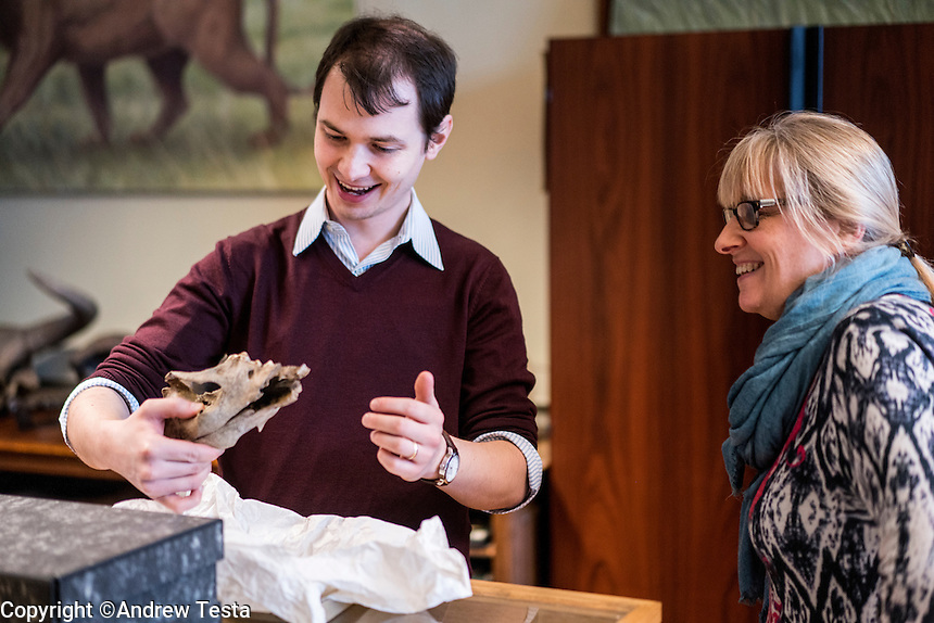 Belgium. Brussels. London. 17th November 2015<br /> Dr. Mietje Germonpré (right) with (need name) as they look at the dog skull that is estimated to be 36,000 years old.<br /> Andrew Testa for the New York Times
