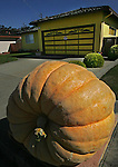 Thad Starr, of Pleasant Hill, Oregon, was glad he came to the annual world championship pumpkin weigh-off in Half Moon Bay. Starr's pumpkin, weighing 1,524 lb., earned him bragging rights and $9,144 in prize money.