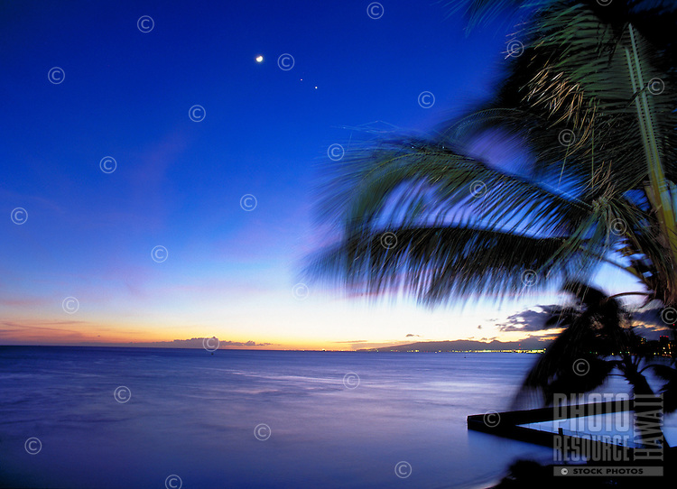 Beautiful twilight with palm trees, moon and stars against a vivid blue sky.