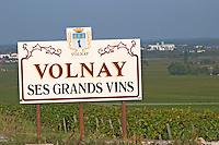 Vineyard. volnay. Burgundy, France