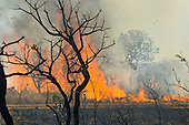 Xingu, Mato Grosso, Brazil. Burning forest.