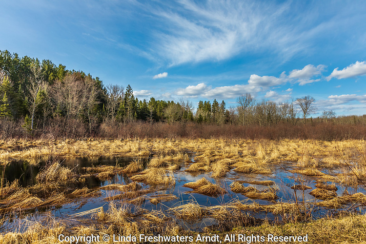 Beautiful light illuminating a northern Wisconsin wetland.