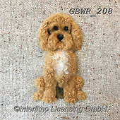 Simon, REALISTIC ANIMALS, REALISTISCHE TIERE, ANIMALES REALISTICOS, innovative, paintings+++++SharonS_Cockapoo,GBWR208,#a#, EVERYDAY dogs,breeds of dog,