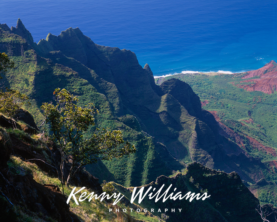 Ohia Tree & Kalalau Valley Cliffs, Na Pali Coast State Park, Kauai, Hawaii, USA.