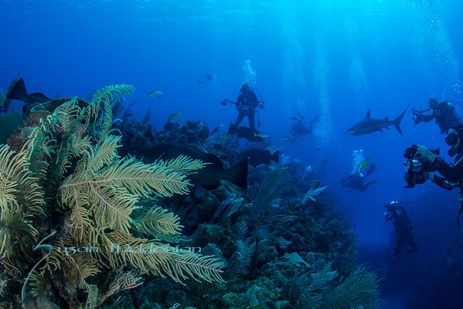 Underwater photographers with reef sharks and groupers, Cuba Underwater, Jardines de la Reina, Protected Marine park underwater, Sharks