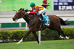 SHA TIN,HONG KONG-MAY 01: Maurice #-1 ,ridden by Joao Moreira ,wins the Champions Mile at Sha Tin Racecourse on May 01,2016 in Sha Tin,New Territories,Hong Kong (Photo by Kaz Ishida/Eclipse Sportswire/Getty Images)