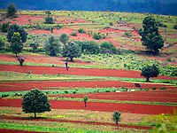 The rich and fertile soil of the Shan state Myanmar