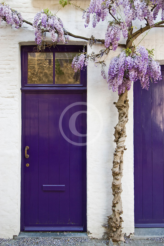 Belgium, Bruges, Painted doorways with lilac tree