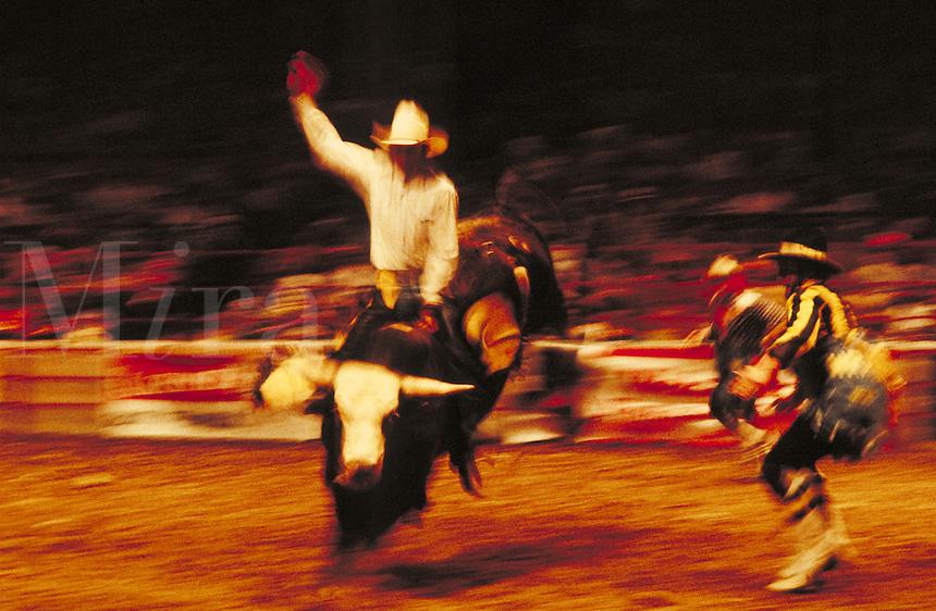 Cowboy riding bull in rodeo. Birmingham Alabama.