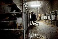 Bernard Lavergne force-feeds his 80 geese one by one in a building adapted for this purpose, Courbiac de Tournon, France, Monday, November 22, 2010. <br /> <br /> The cages enable him to easily take hold of each goose from the outside and slide their neck into a gap in the door. This exposes their head and neck for force-feeding.