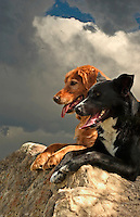 Two dogs looking out at the world while resting on a rock on the Dinosaur Ridge in Morrison, Colorad
