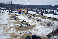 Dogs Rest in Dog Lot at Ruby Checkpoint