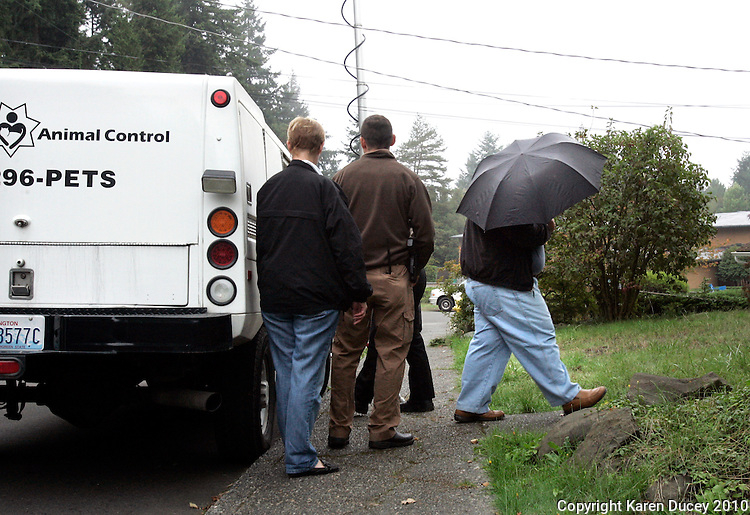 Walk of Shame:: The owner of Lucky, a dog who has been locked in a basement for four years, then left without anyone home for the past three months, hides from the TV cameras under an umbrella after loading Lucky into a King County Animal Control truck outside his mother's home in Shoreline, WA on September 29, 2010.  Unfortunately Lucky's freedom was only seconds long as he was carted away to the animal shelter in Kent, WA, despite rescue groups on the scene who were willing to take him.  The vet at KCACC shelter in Kent, WA (who wouldn't allow photos taken) said that the dog appears in relatively fine health.   Lucky is a 27 pound American Eskimo mix.  The owners told animal control he is about 9 years old.  On the vet's examining table he was visibly very scared.  He had some matted fur and feces on his exceptionally heavy coat.  He is male and not neutered.  Regional Manager of Animal Services, Ken  Nakatsu, said the house was clean when officers inspected it.  The owners told the inspectors that Lucky had the run of the house and only used the basement when he needed to poop.  The fate of this dog is unknown as a criminal investigation is underway.   (photo © Karen Ducey 2010). .