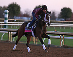Union Gables, trained by trainer Todd A. Pletcher, exercises in preparation for the Breeders' Cup Juvenile Fillies Turf at Keeneland Racetrack in Lexington, Kentucky on November 3, 2020.