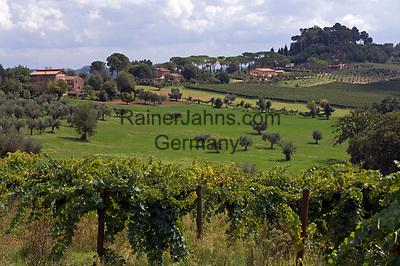 Italien, Latium, Berardelli bei Magliano Sabina: Weinbau in der Region Sabina | Italy, Lazio, Berardelli near Magliano Sabina: wine growing at Sabina region