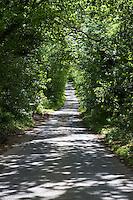 Country lane with shadows, near Garstang, Lancashire