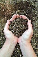 Cupped Hands with dirt.
