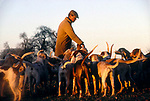 Duke of Beaufort Hunt Badminton House estate Gloucestershire. Evening  hound exercise in Parkland with huntsman Charles Wheeler who is first Whipper-in before a days hunting. 1996. 1990s.