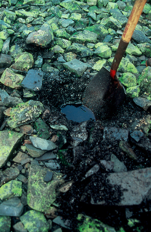 Alaska, Exxon Valdez oil spill aftermath: Researchers investigate crude oil saturating the intertidal shore one year after the 1989 environmental disaster, Knight Island, Prince William Sound, Alaska,