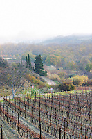 near Magrie . Frost. Limoux. Languedoc. An early winter morning with mist still laying low and sunshine glowing golden. France. Europe. Vineyard.