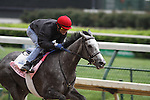 Beautician with Alex Solis up works over a sloopy track at Churchill Downs in preparation for The Kentucky Oaks. 04.26.2010