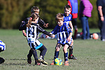 NELSON, NEW ZEALAND - AUGUST 8: Saturday Morning Football Saturday 8 August 2020 , New Zealand. (Photo byEvan Barnes/ Shuttersport Limited)