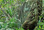 Rainforest landscape, Rio Bravo Conservation Area, Belize