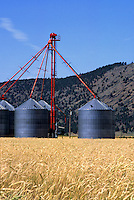 Grain silos in a wheat field - DORIS, CALIFORNIA