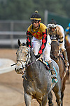 HOT SPRINGS, AR - MARCH 17: Rebel Stakes at Oaklawn Park on March 17, 2018 in Hot Springs, Arkansas. (Photo by Ted McClenning/Eclipse Sportswire/Getty Images)