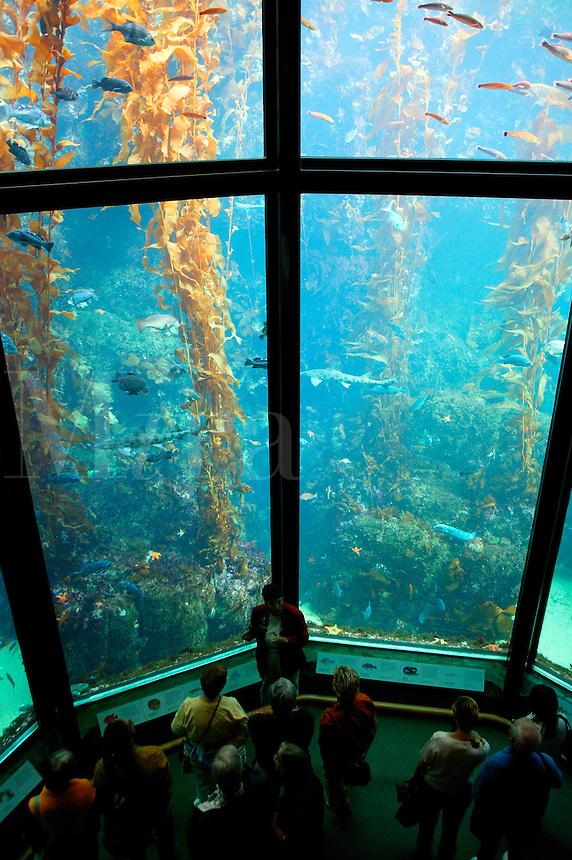 The kelp forest exhibit at The Monterey Bay Aquarium, Monterey, California