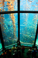 The kelp forest exhibit at The Monterey Bay Aquarium, Monterey, California