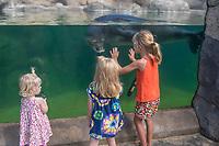 children admire KP2 or Ho'ailona, a young male Hawaiian monk seal, Neomonachus schauinslandi ( endemic and critically endangered species ) Waikiki Aquarium, Honolulu, Oahu, Hawaii, USA