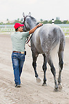 HALLANDALE BEACH, FL - JANUARY 01:   <br /> Scenes from Gulfstream Park. Squadron A with groom head to the test barn after winning the G3 Mr Prospector Stakes at Gulfstream Park. (Photo by Arron Haggart/Eclipse Sportswire/Getty Images