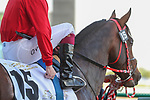 March 27, 2021: URBAN ICON (GB) #15 in the post parade for the Godolphin Mile on Dubai World Cup Day, Meydan Racecourse, Dubai, UAE. Shamela Hanley/Eclipse Sportswire/CSM