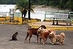 Ecuador Tour.<br /> Parque de los monos (Misahualli).