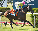 Slumber (no. 7), ridden by Irad Ortiz Jr. and trained by Chad Brown, wins the 143rd running of the grade 1 Manhattan Stakes for four year olds and upward on June 06, 2015 at Belmont Park in Elmont, New York. (Bob Mayberger/Eclipse Sportswire)