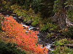 Autumn afternoon, stream, fall color, Rocky Mountain National Park, wilderness, Colorado, USA