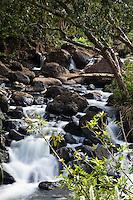 A stream near Kilauea Falls