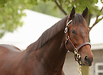11 September 2010.  Hip #168  Giant's Causeway - Leo's Pegasus colt, consigned by Lane's End.
