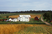Ohio, amish, farm, Holmes couty, Amish farmers are harvesting a field of wheat with horses in Holmes County. The white Amish house with a red barn sits along the dirt country road.